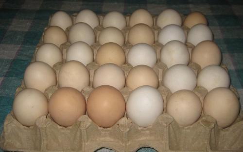 Kənd yumurtaları alarkən nələrə diqqət etmək lazımdır?