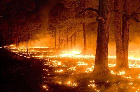 FHN: Cəlilabadda baş verən meşə yanğını söndürülüb - YENİLƏNİB