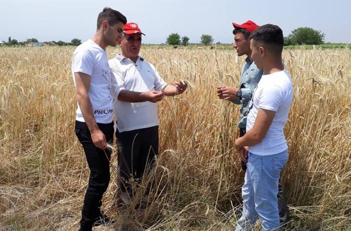 """""""GMO artıq süfrələrimizdə özünə yer edib"""" - ALİMDƏN HƏYƏCAN TƏBİLİ"""