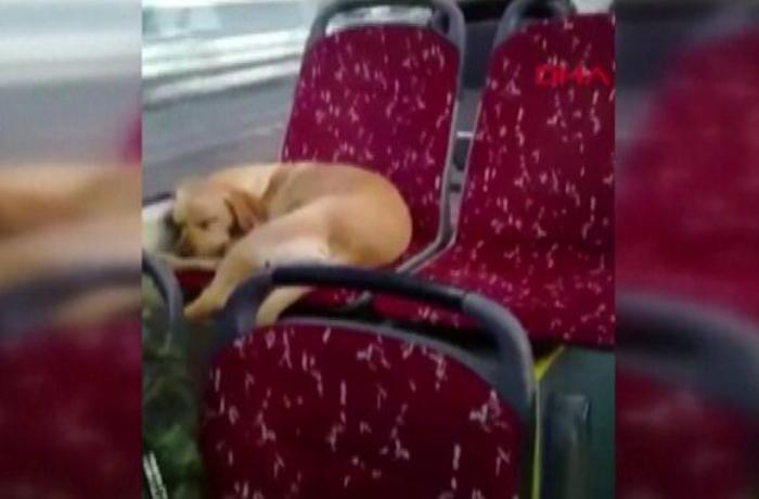 Avtobus sürücüsünün bu hərəkəti izləyənləri duyğulandırdı - VİDEO