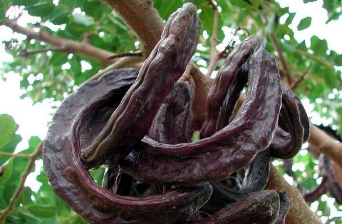 15 il bar verməyən bitkinin İNANILMAZ FAYDALARI