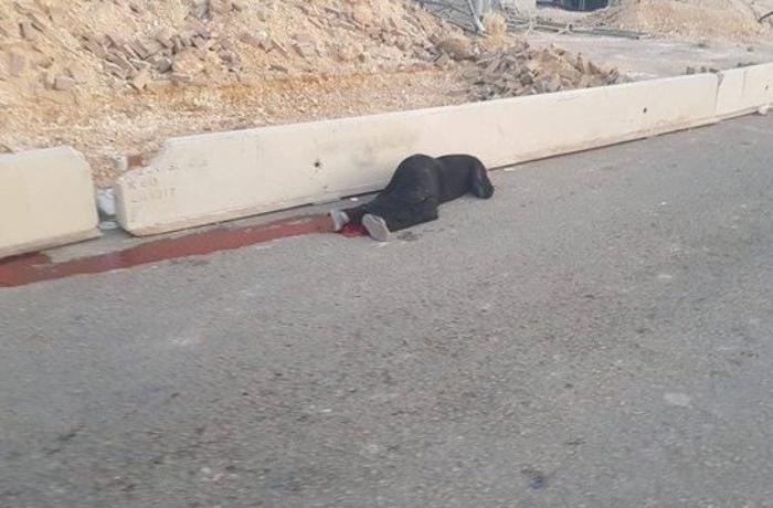İsrail əsgərləri fələstinli qadını öldürdü - VİDEO