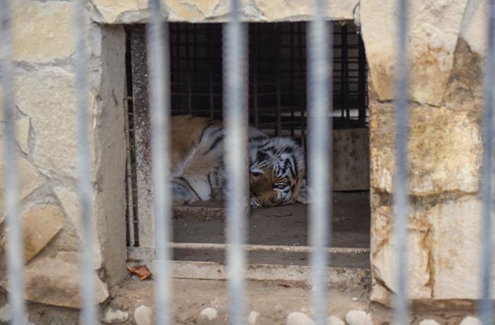 Bakı sakinlərinin çoxdan gözlədiyi XƏBƏR - Zooparkın açılış vaxtı bilindi