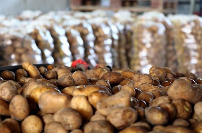 Kartof idxalında kəskin artım var - Qiymətlər də bahalanıb