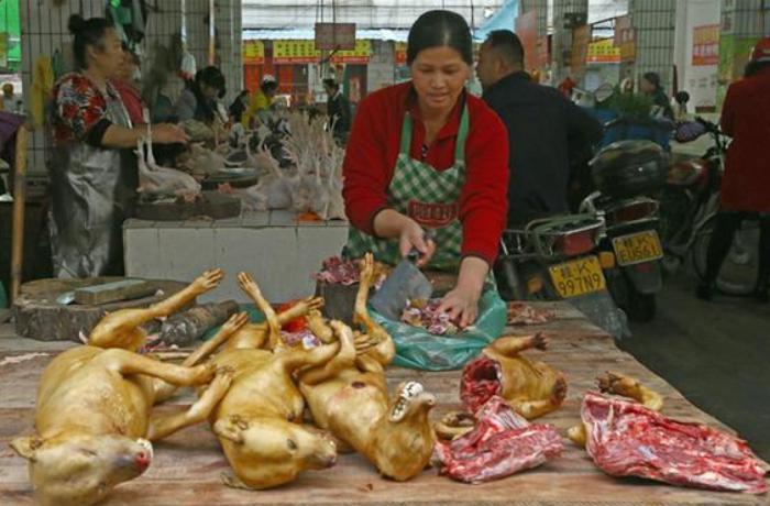 Çində restoran sahibləri it-pişik əti qadağasından narazıdır