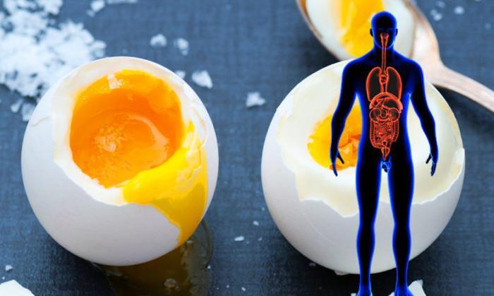 Acqarnına gündə 1 yumurta yesək nə baş verər?