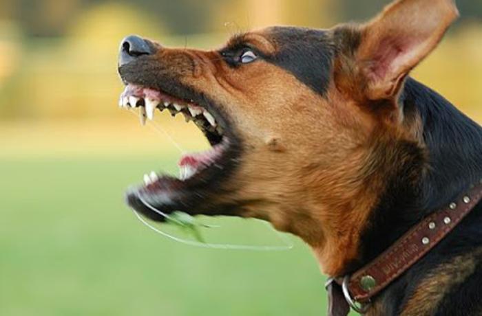 Quduz itin dişlədiyi 53 yaşlı kişi öldü - Abşeronda