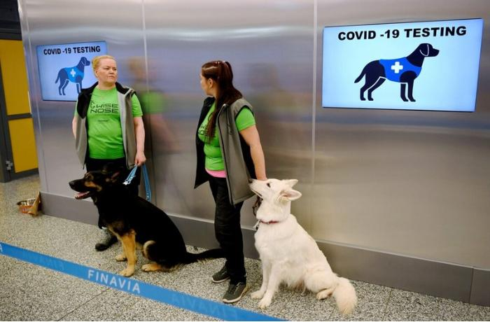 Dogs deployed at Helsinki Airport to sniff out coronavirus