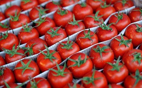 Azərbaycandan Qazaxıstana pomidor ixracına qoyulan qadağa ilə bağlı videokonfrans keçirilib