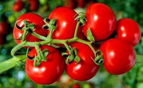 Azərbaycan və Rusiya arasında pomidor qadağası ilə bağlı növbəti görüş keçirilib