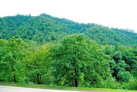 Azərbaycanın meşə ilə örtülü sahələrinin 25 faizi işğal altında olan ərazilərdə yerləşir - AÇIQLAMA