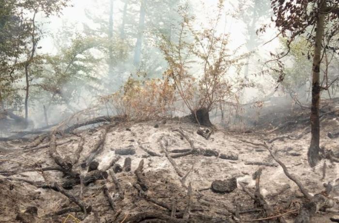 Ermənilərin Goranboya mərmi atması nəticəsində meşəlik ərazidə yaranan yanğın söndürüldü