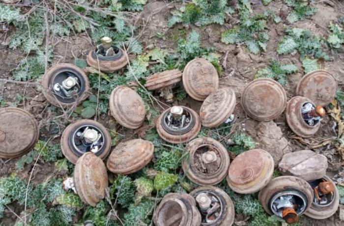 Ermənilərin ərazilərimizdə basdırdıqları minalar aşkarlandı - FOTOLAR
