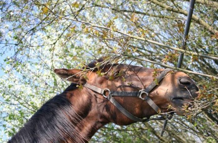 Gədəbəydə atı ağacdan asdılar, polis araşdırmaya başladı
