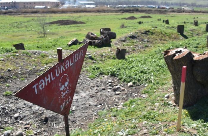 Ermənilərin Qubadlıda törətdiyi ekoloji terror - FOTO