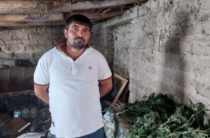 İstixanada narkotik yetişdirən Şəmkir sakini saxlanılıb – FOTO