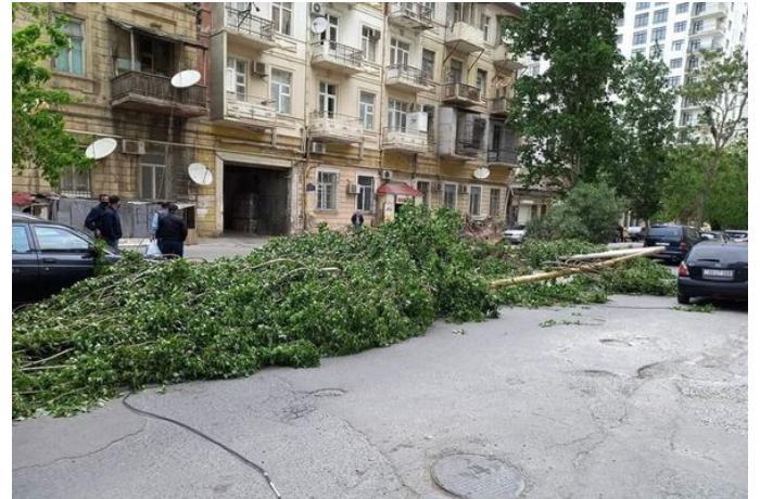 Bakıda güclü külək 31 ağacı aşırıb - FOTO