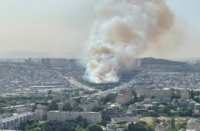 Bakıda ağaclıq ərazidə baş verən yanğın söndürüldü - YENİLƏNİB+VİDEO