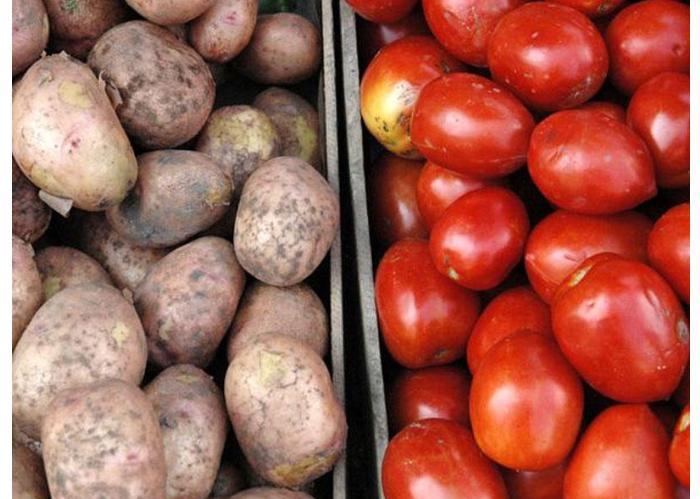 Pomidor və kartofu xarici ölkələrə neçəyə satırıq? – MƏBLƏĞ