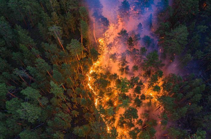 Son bir ayda Rusiyada Azərbaycanın 6 ən böyük rayonu böyüklükdə meşə yanıb