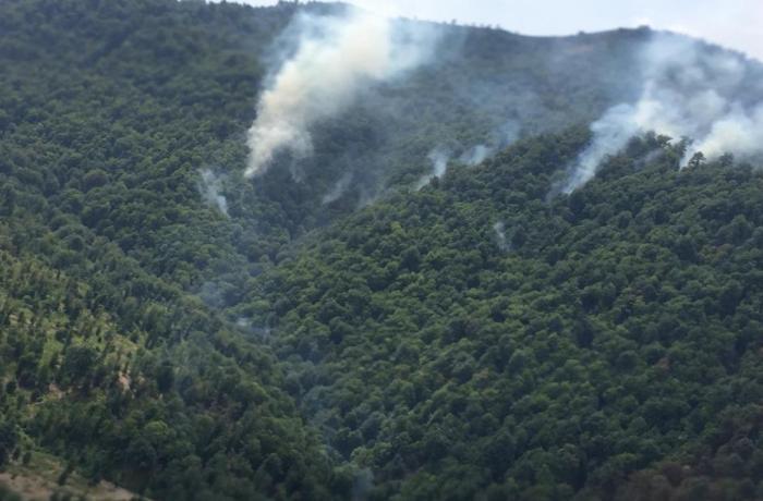 Yardımlıda meşə zolağında baş verən yanğınla bağlı rəsmi məlumat - VİDEO