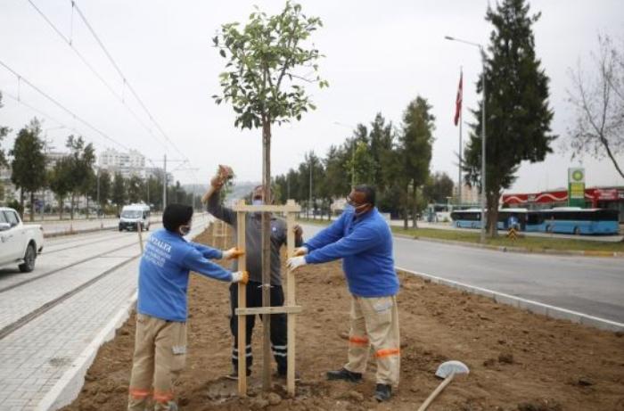 Antalyada Mingəçevir şəhidlərinin xatirəsinə ağac əkiblər - FOTO