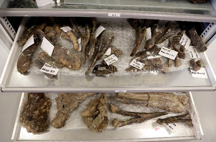 В Британии обнаружили кости гигантских хищных динозавров